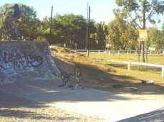 /skateparks/australia/burpengary-ramp/